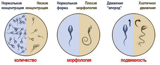 как ускорить процесс спермы-ах2