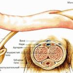 Нащупали болезненные уплотнения в пенисе? — это кавернит