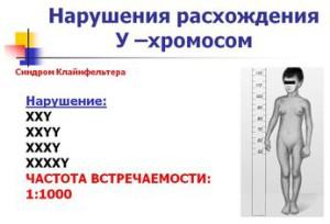 Нарушения расхождения У-хромосом