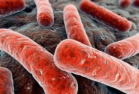 Туберкулезные палочки