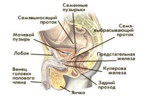 Куперовая железа