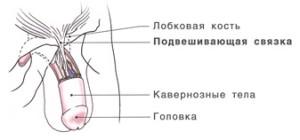 Красные прыщи на головке у мужчин фото возможные болезни лечение